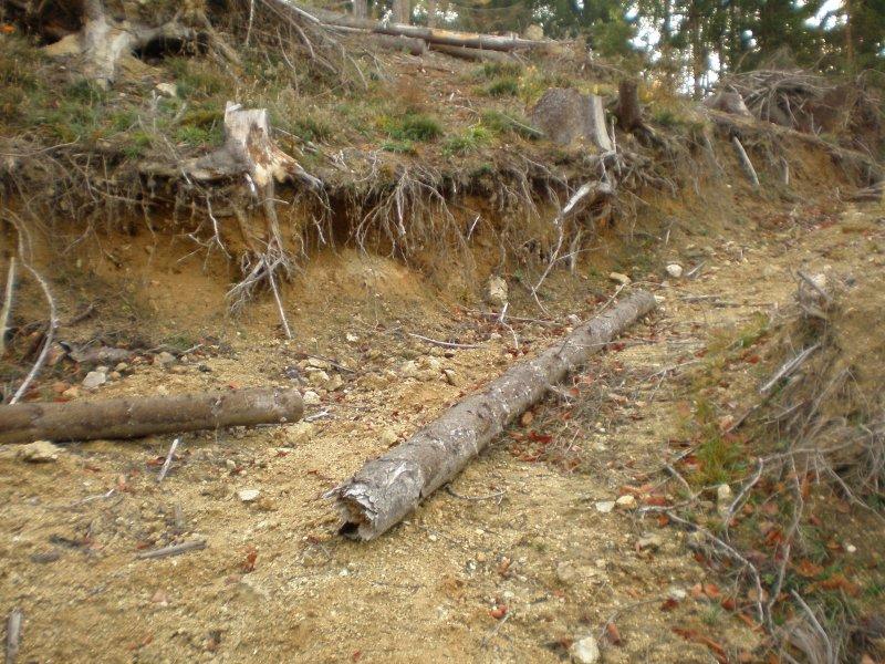f6dbfffee polom v lese a zárezy vo svahu otvorili žily z pegmatitom